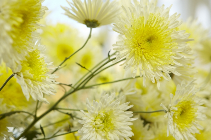 Victoria In Bloom Where To See Flowers Blooming This Spring Visit